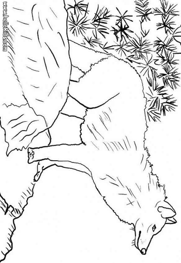 Anime Elemental Wolves Pages Coloring Pages